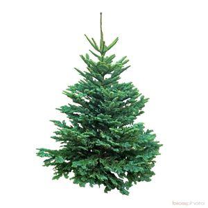 Support pliable métallique sapin de Noël