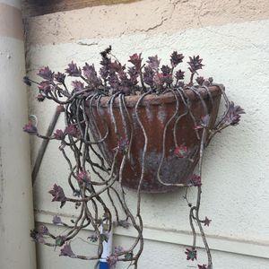 Pot à fleur murale