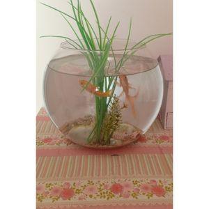 Donne aquarium