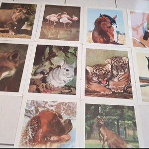 Posters et descriptions des animaux.