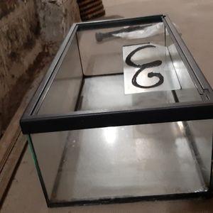 aquarium tortue