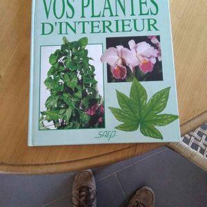 Soigner - entretenir Vos plantes d'interieur