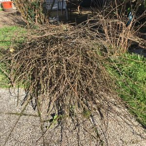 Donne petit bois à faire sécher pour l'hiver