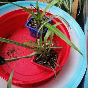 Bouture plante verte