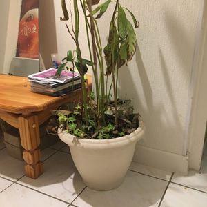 Grand pot plastique blanc pour plante