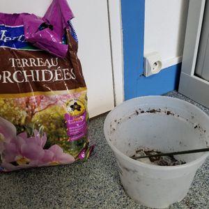 Terreau orchidée