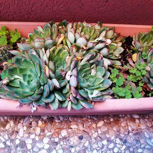 Bac de plantes grasses