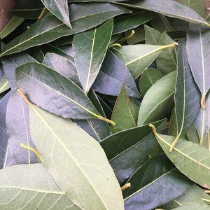 Donne feuilles de lauriers